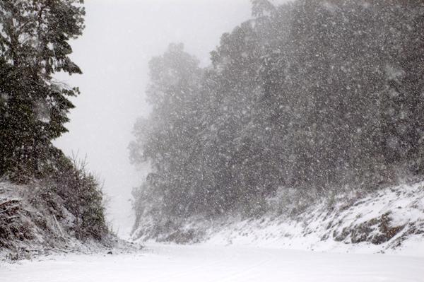 snowyroad_web
